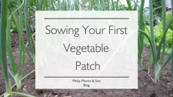 Sowing Your First Vegetable Patch