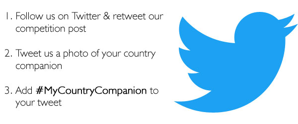 Philip Morris Country Companion Competition |Twitter